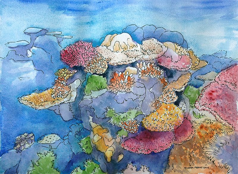 800x586 Coral Reef Watercolor Painting Coral Reefs And