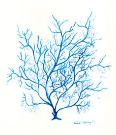 236x276 Blue Coral Archival Watercolor Print Art Coral Art