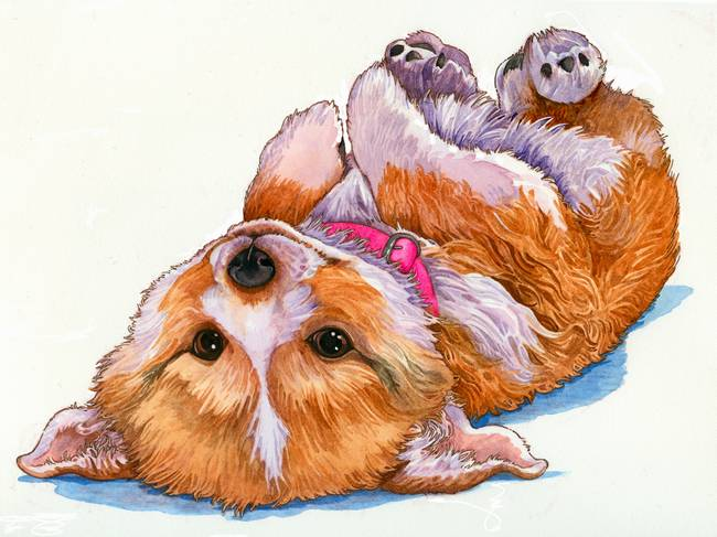 650x487 Little Corgi Puppy By Wendy Edelson