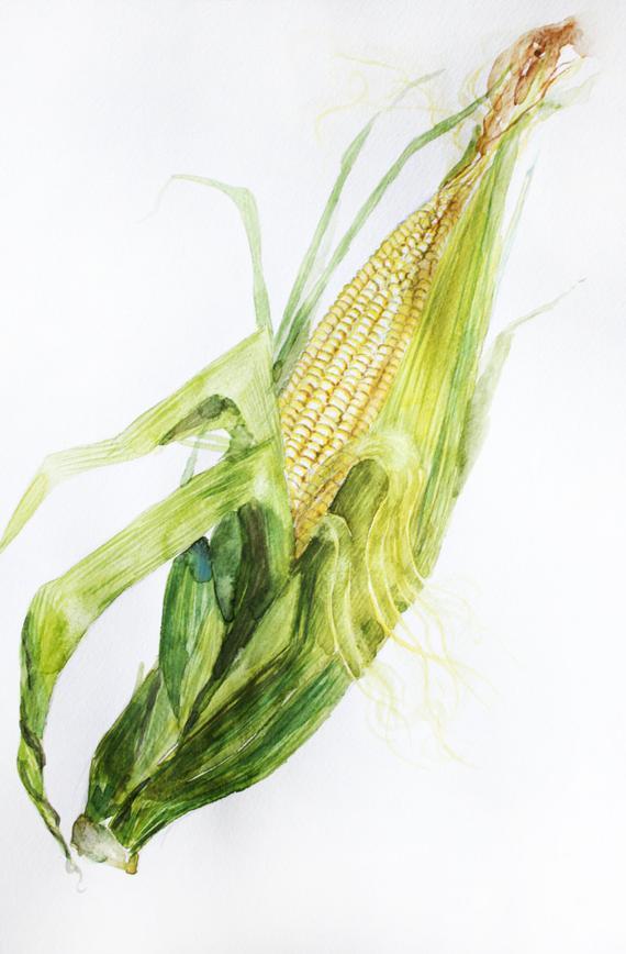 570x868 Original Watercolor Corn Corn Watercolor Decor For Kitchen Etsy