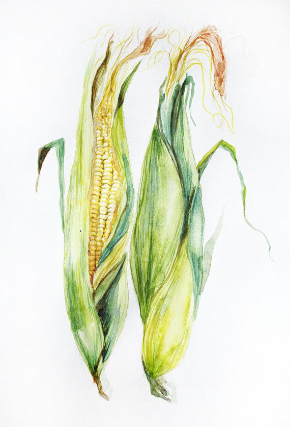 570x837 Corn Original Watercolor, Corn Watercolor, Art Decor, Garden Gifts