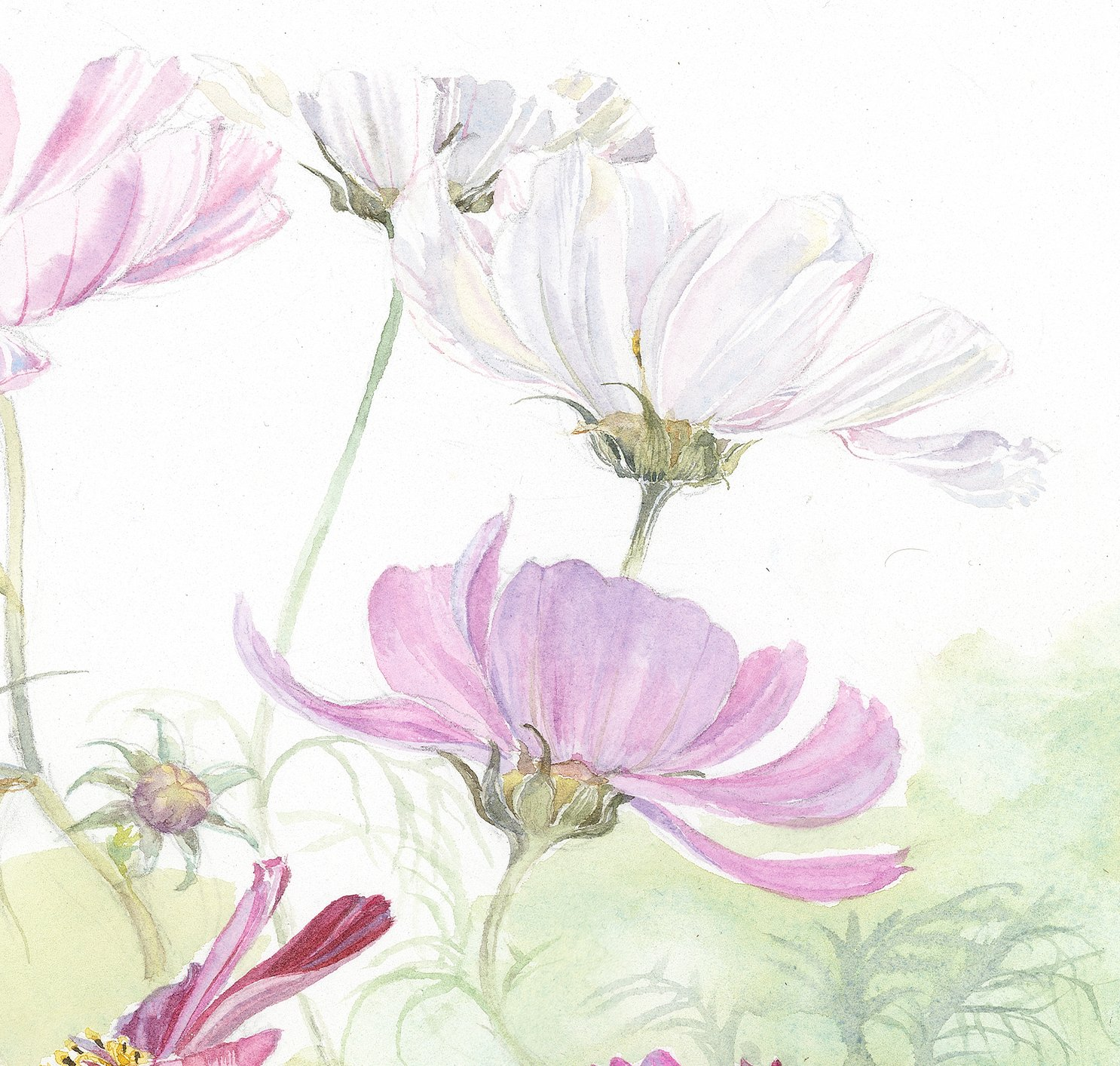 1486x1413 Cosmos Watercolour (Print On Canvas, 16 X 16 In.)