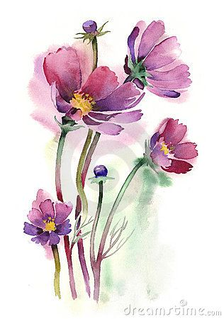 316x450 Watercolor Cosmos Flowers