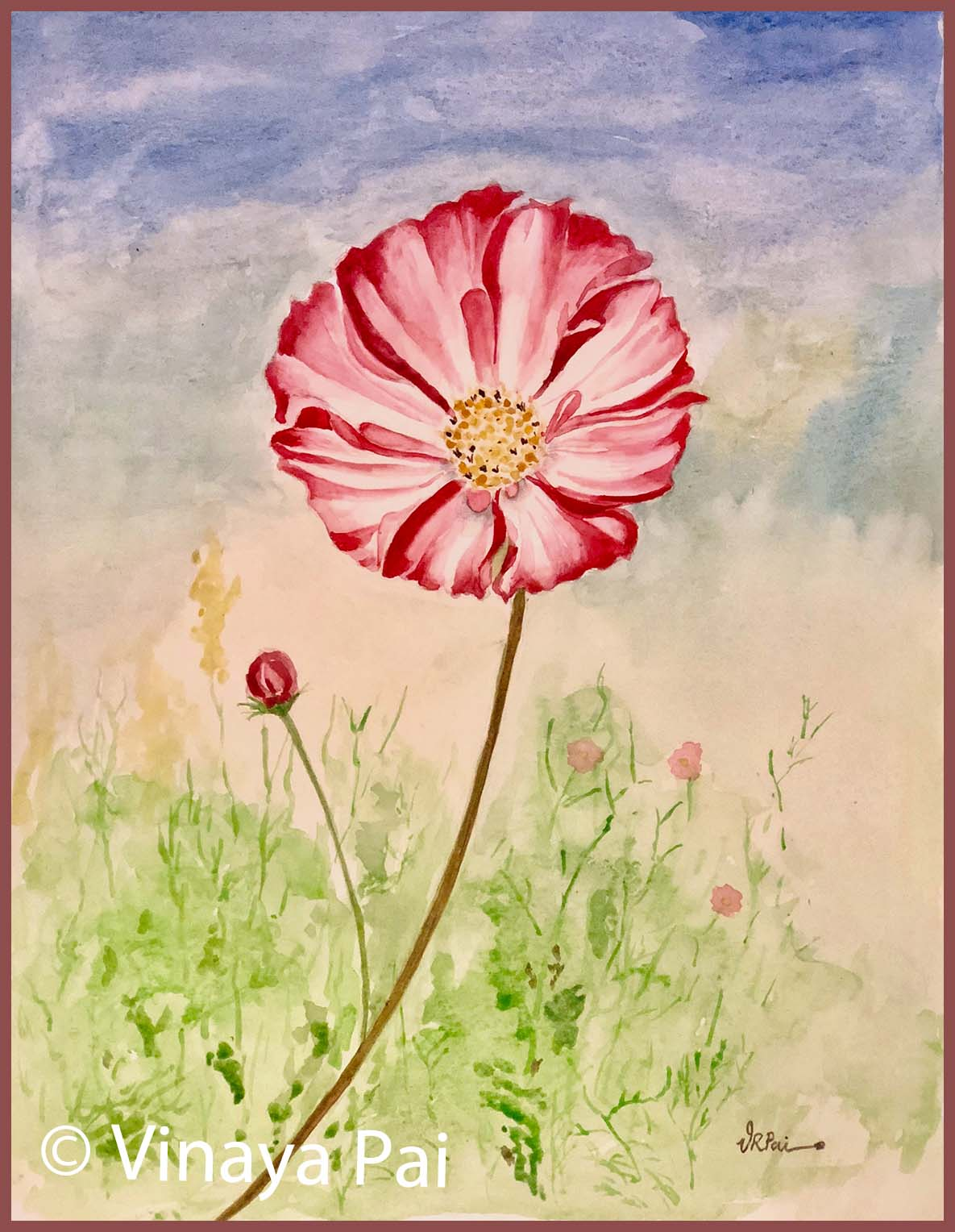 1185x1528 Cosmos( Watercolor)