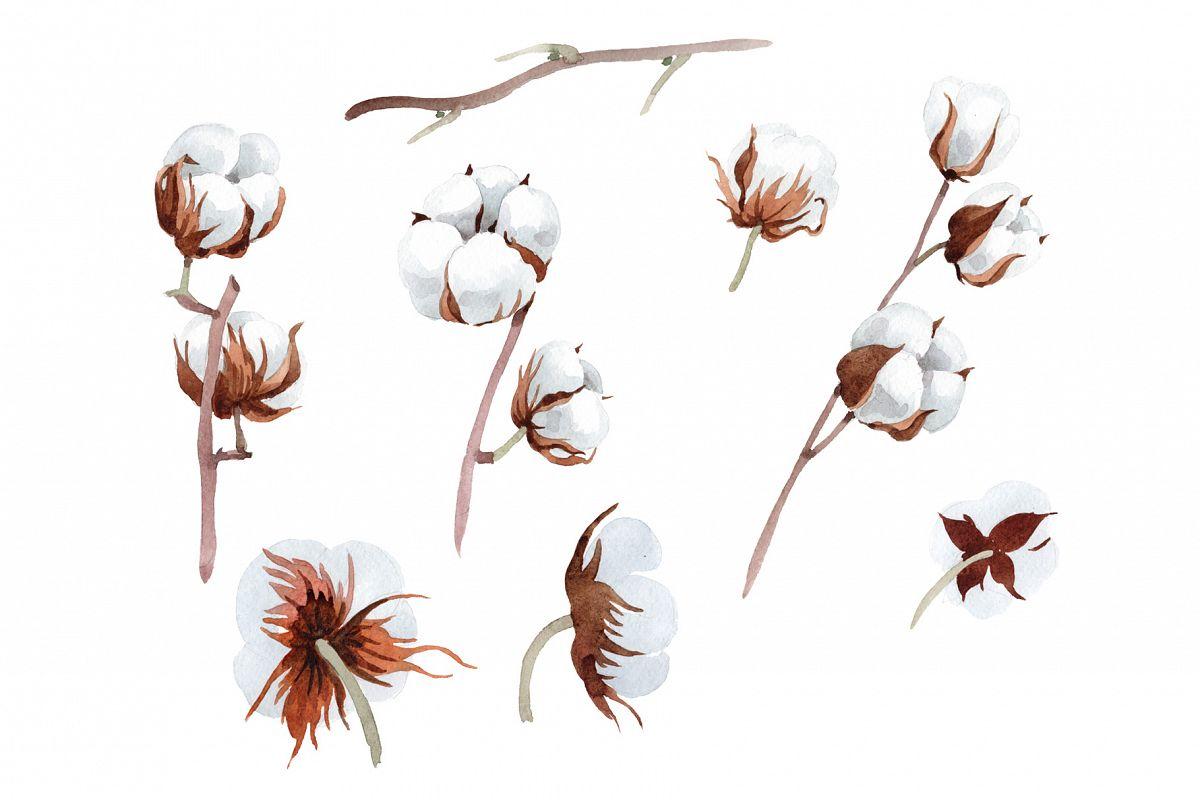 1200x800 Cotton Soft Flower Png Watercolor Set