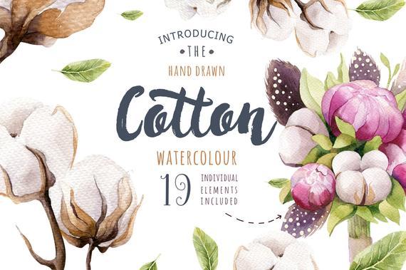 570x379 Watercolor Cotton Floral Clipart Floralcotton Balls Clip Etsy