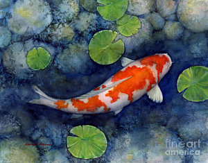 300x235 Koi Fish Watercolor Paintings Fine Art America