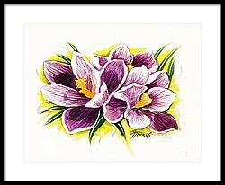250x206 Purple Crocus Watercolor Painting By Gg Burns