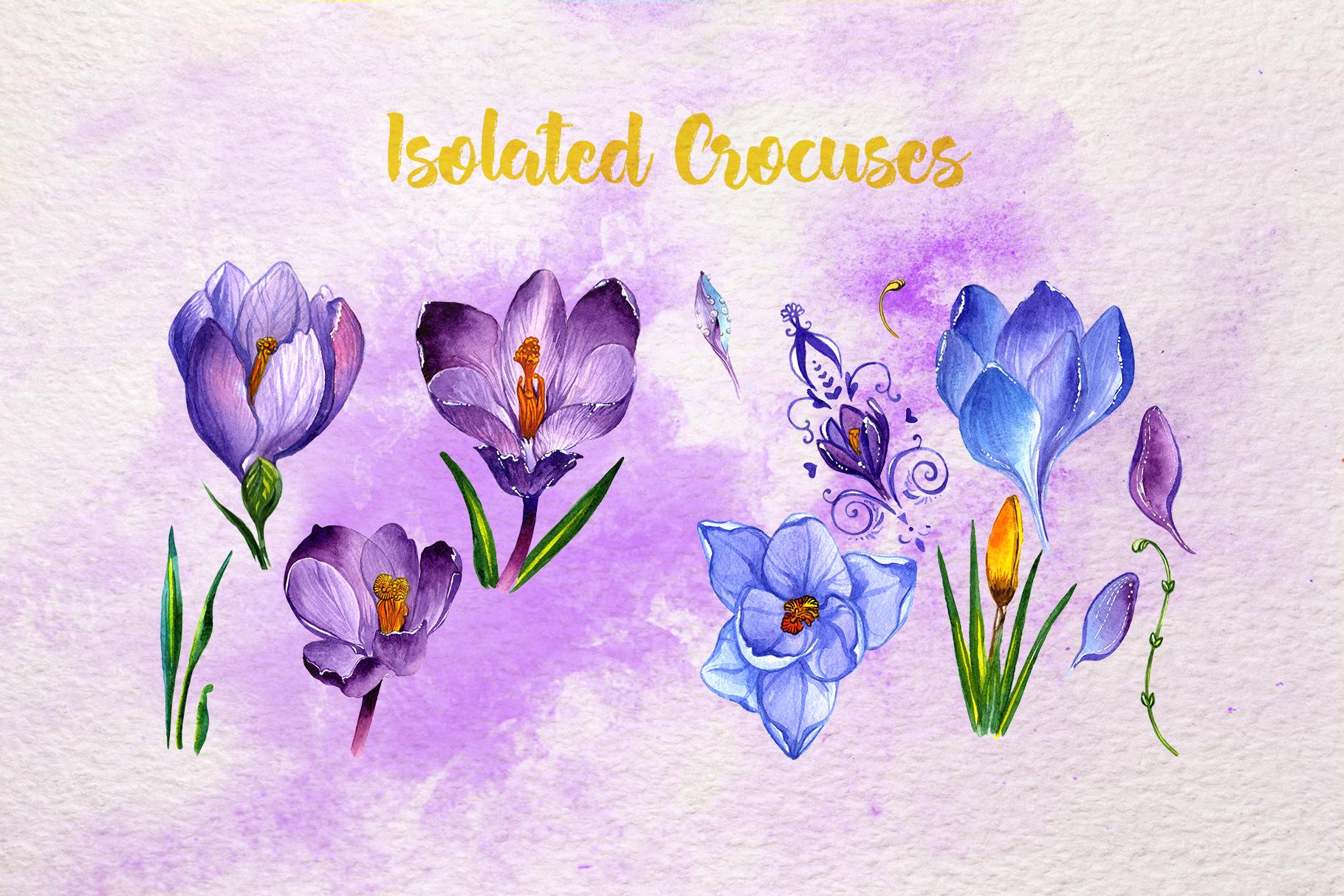 1820x1214 Blue And Purple Crocuses Png Watercolor Set