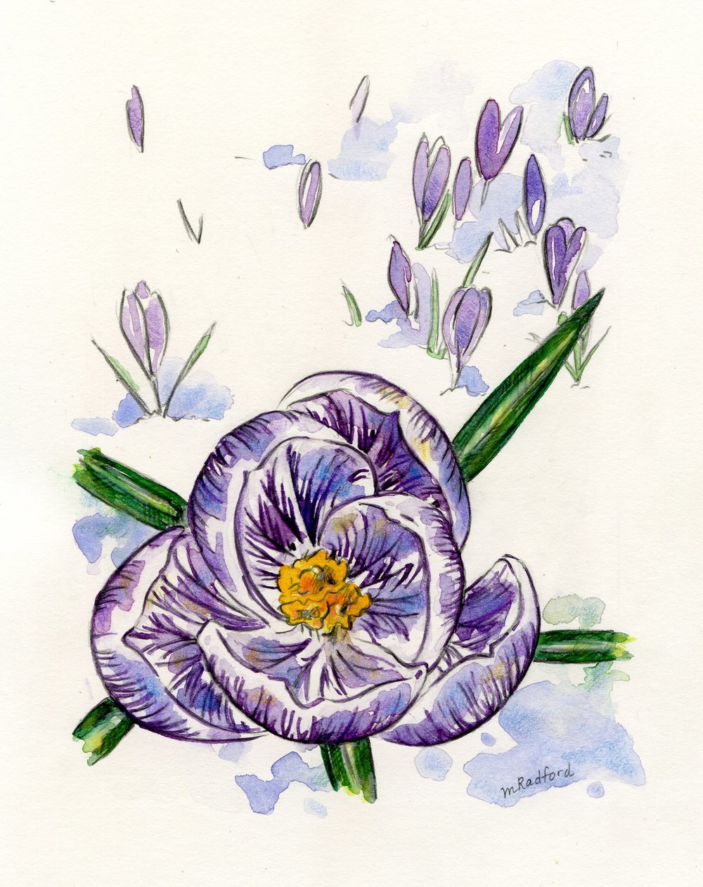 1000x1262 Watercolor Print Of Purple Crocus Hannah Anderson