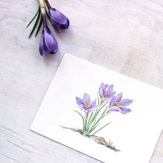236x236 Crocus Original Watercolor Painting, Crocus Painting, Watercolor