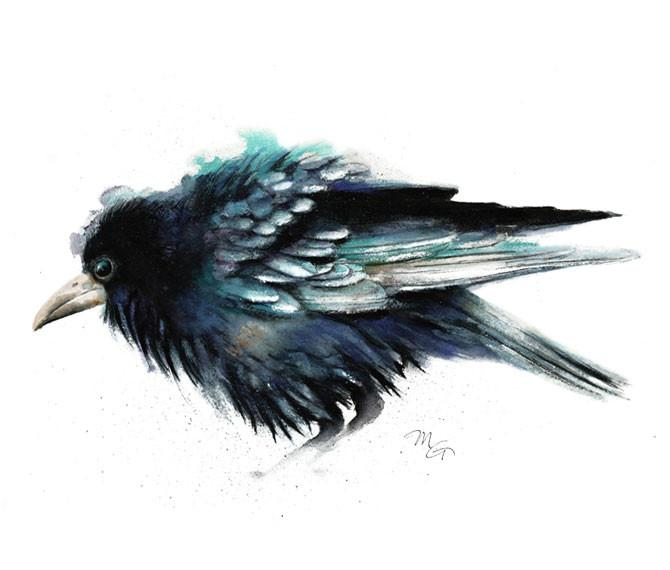 670x570 Crow Watercolor Archival Print Mira Guerquin Watercolors