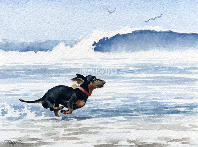 650x483 Stunning Dachshund Watercolor Painting Reproductions For Sale On