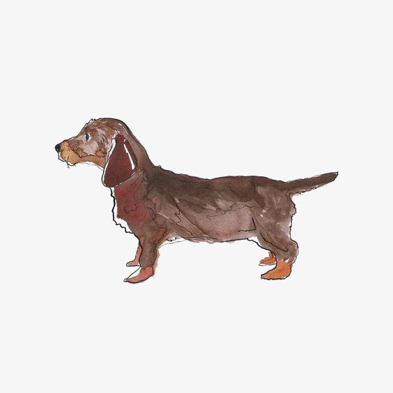 564x564 Watercolor Dachshund, Watercolor Clipart, Hand Painted Puppy