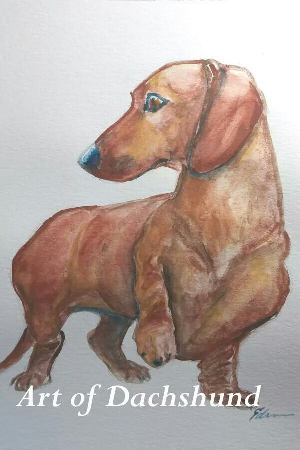 600x899 Art Of Dachshund, Watercolor Doxie Love Dachshunds