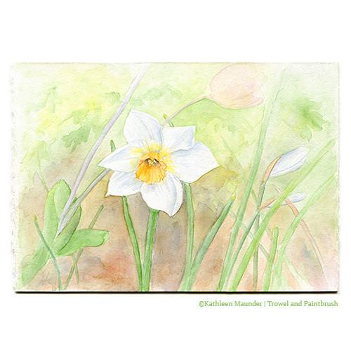500x500 Daffodil Watercolor Painting