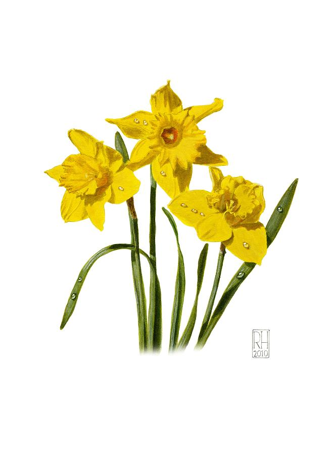 653x900 Daffodil Watercolor Paintings Fine Art America