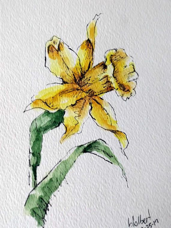 570x760 Daffodil Flower Original Art Watercolor Painting Pen And Ink