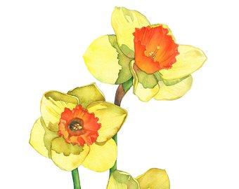 340x270 Daffodil Watercolour Painting Print Daffodil Print Of Etsy