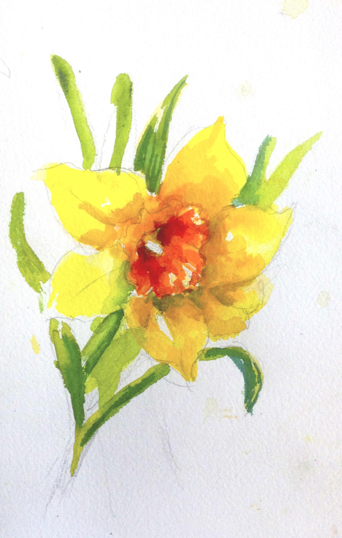 1800x2833 Daffodils Andrea Brooks Studio