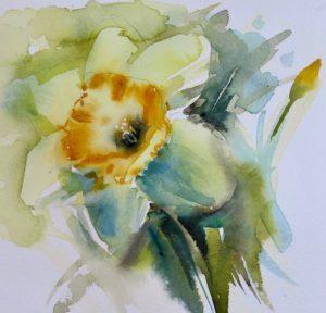 300x288 Daffodils Kaye Parmenter