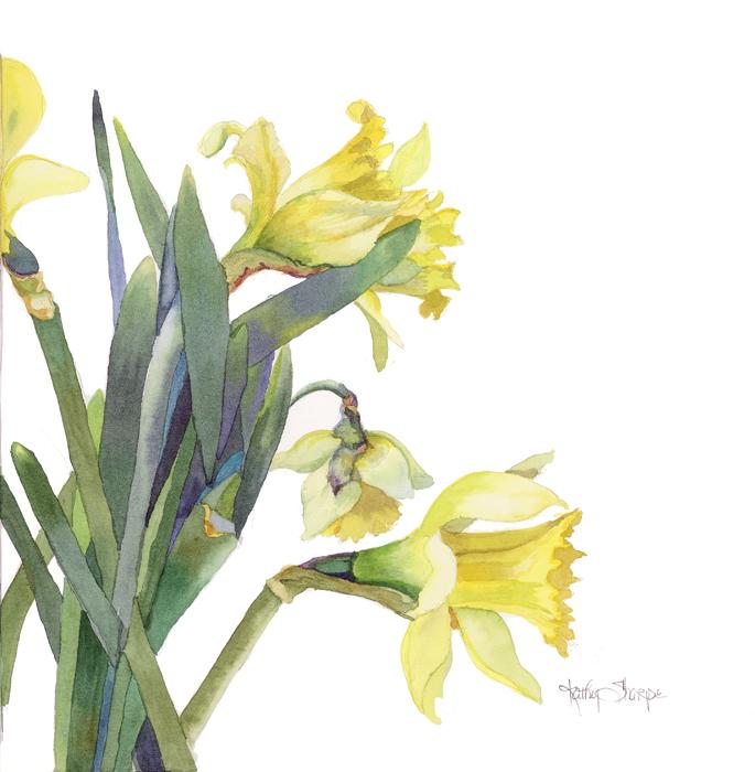 685x700 Daffodils @ Kathy Sharpe Studio Amp Gallery