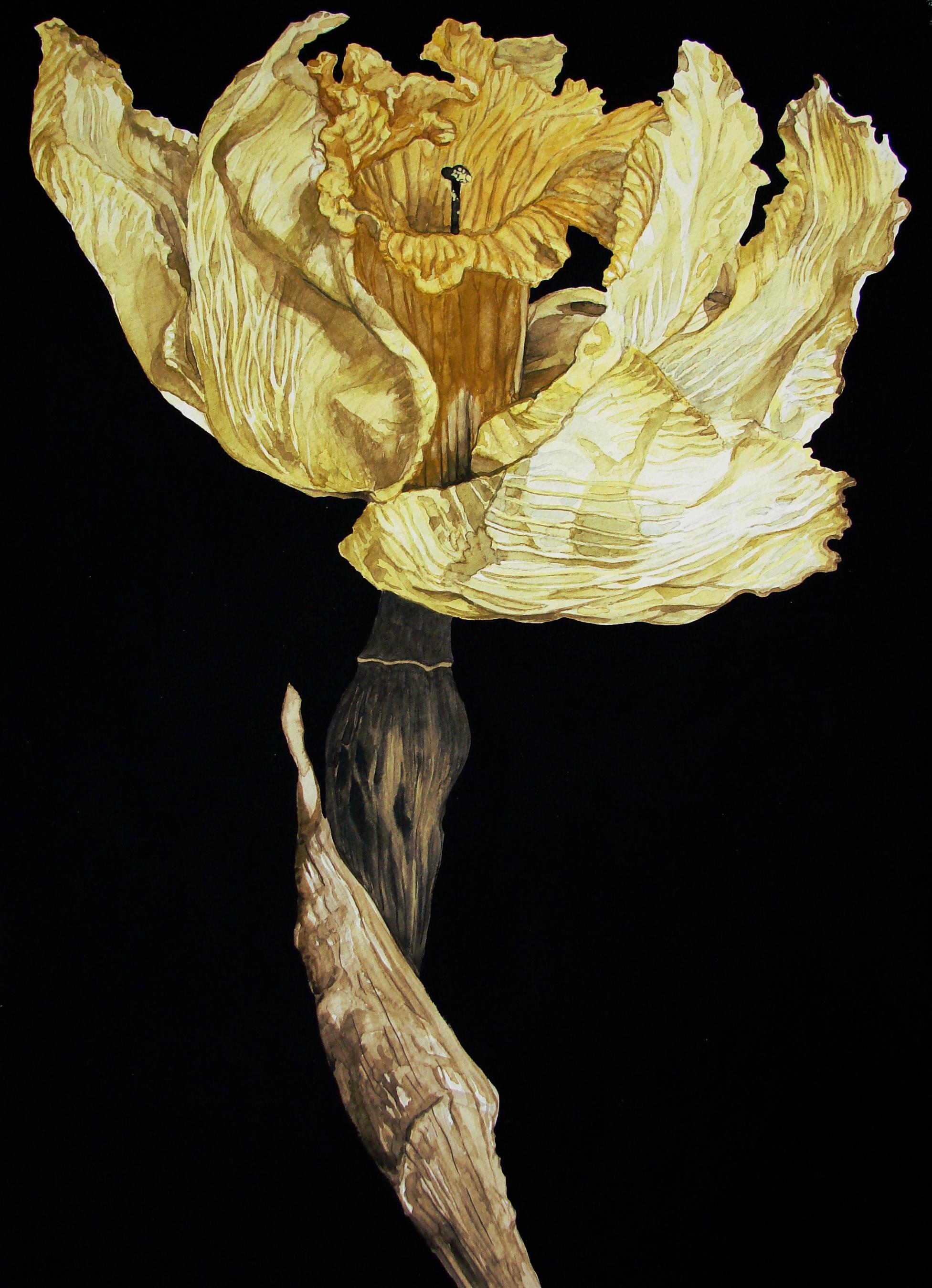 1952x2700 Dried Daffodil Watercolor Illustrations