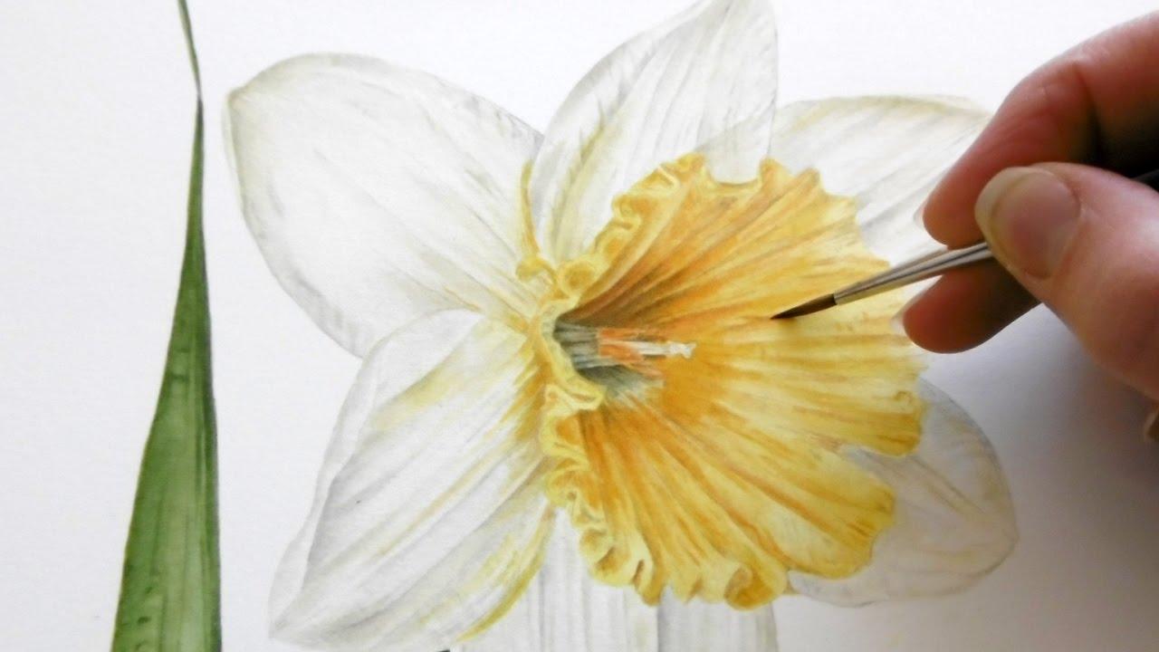1280x720 How To Paint A Bright Amp Vibrant Springtime Daffodil Jarnie