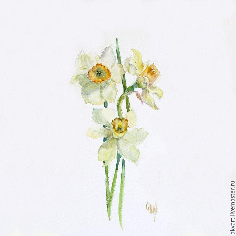 803x803 Watercolor. Watercolor Miniature. Flowers. Daffodils Shop Online