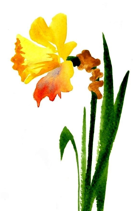 562x877 Daffodil, Watercolor By Kim Attwooll Watercolours