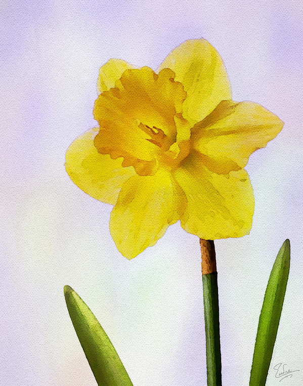 599x763 Daffodil Faux Watercolor Art Print By Endre Balogh