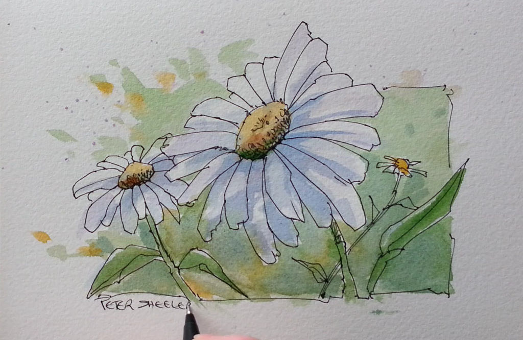 1024x666 Paint A Daisy Flower. Line And Wash Watercolor. New