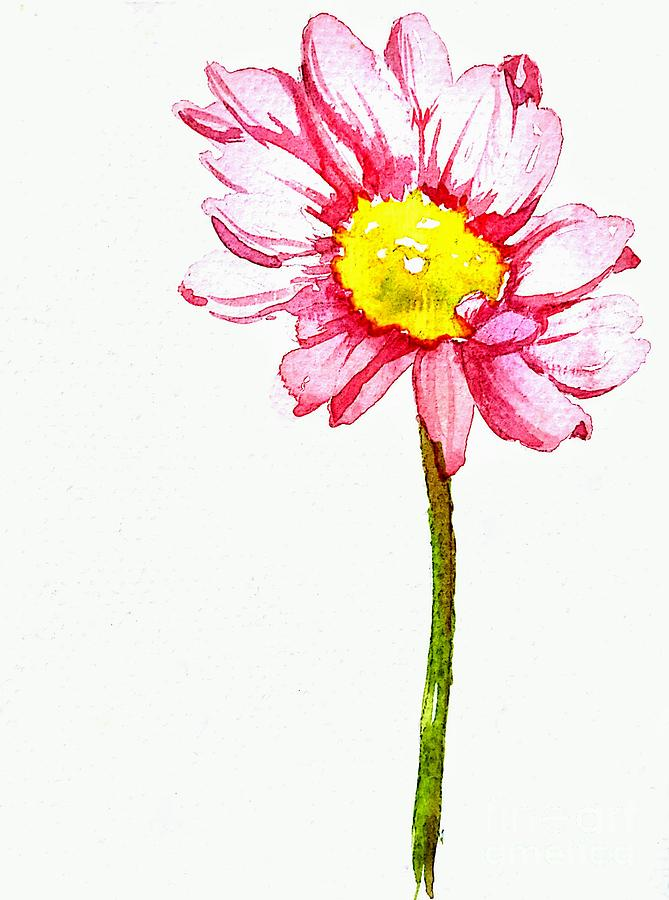 669x900 Pink Daisy Flower With Yellow Stamen In Watercolor Painting By