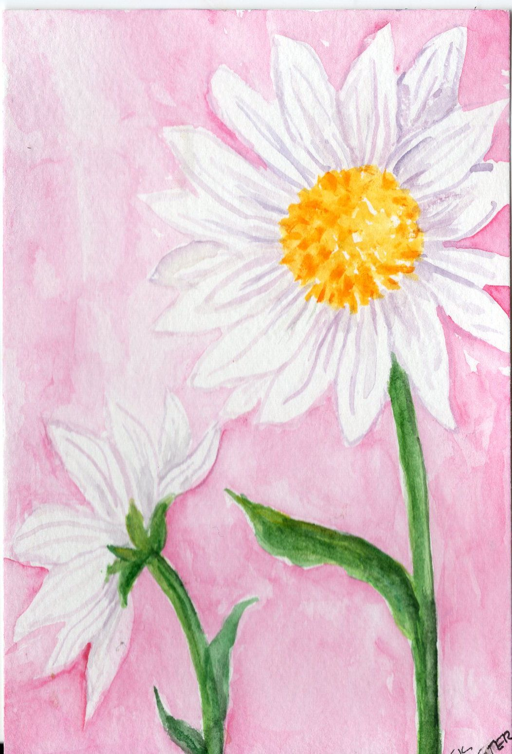 1052x1549 Shasta Daisy Watercolor Painting Original 4 X 6 Daisy Flowers