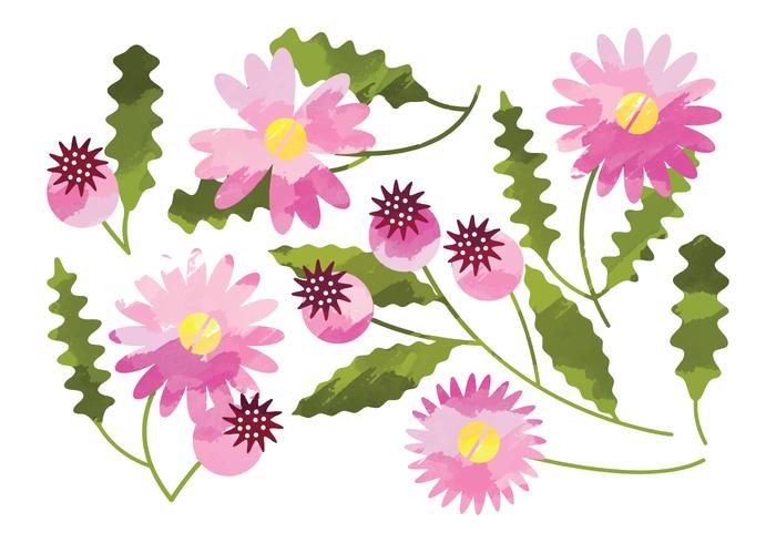 700x490 Vector Watercolor Daisy Flower Elements