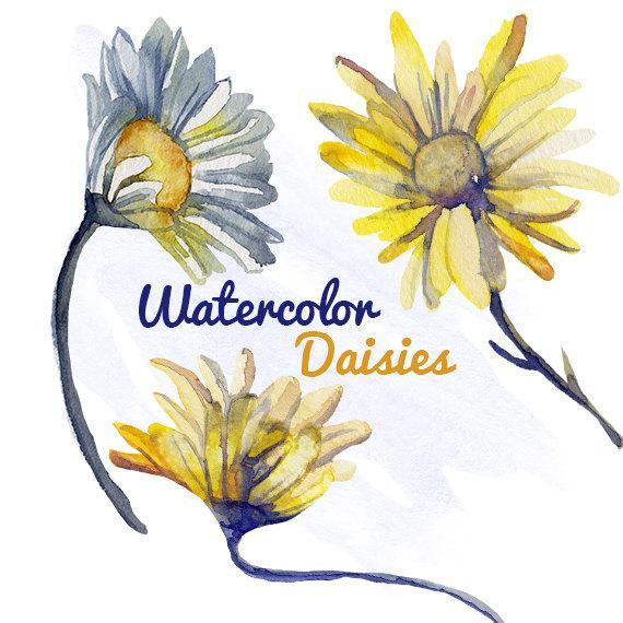 570x570 Watercolor Daisy Flower Clip Art For By Digitalpresscreations