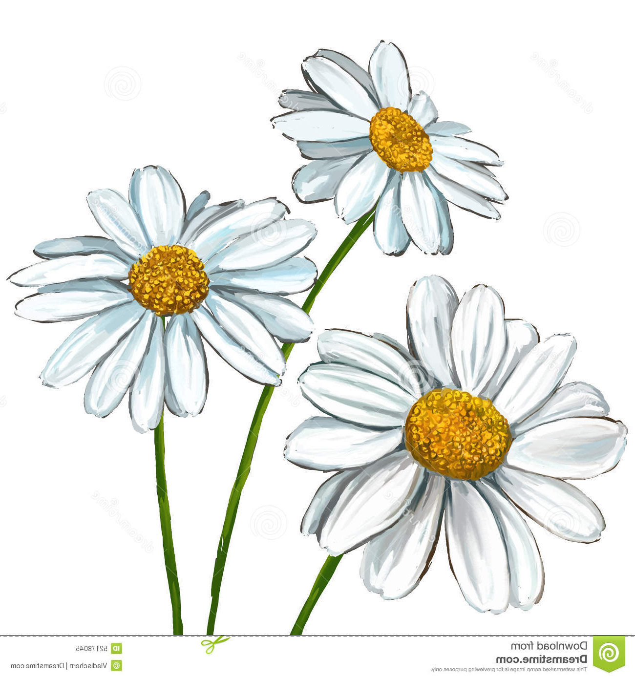 1300x1390 Daisy Flower Drawings With Color Daisy Flower Drawing Daisy Sketch
