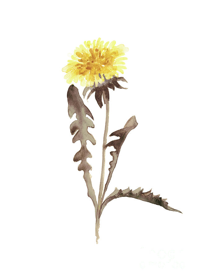 636x900 Asters Flowers, Abstract Flower Yellow Wall Decor, Dandelion