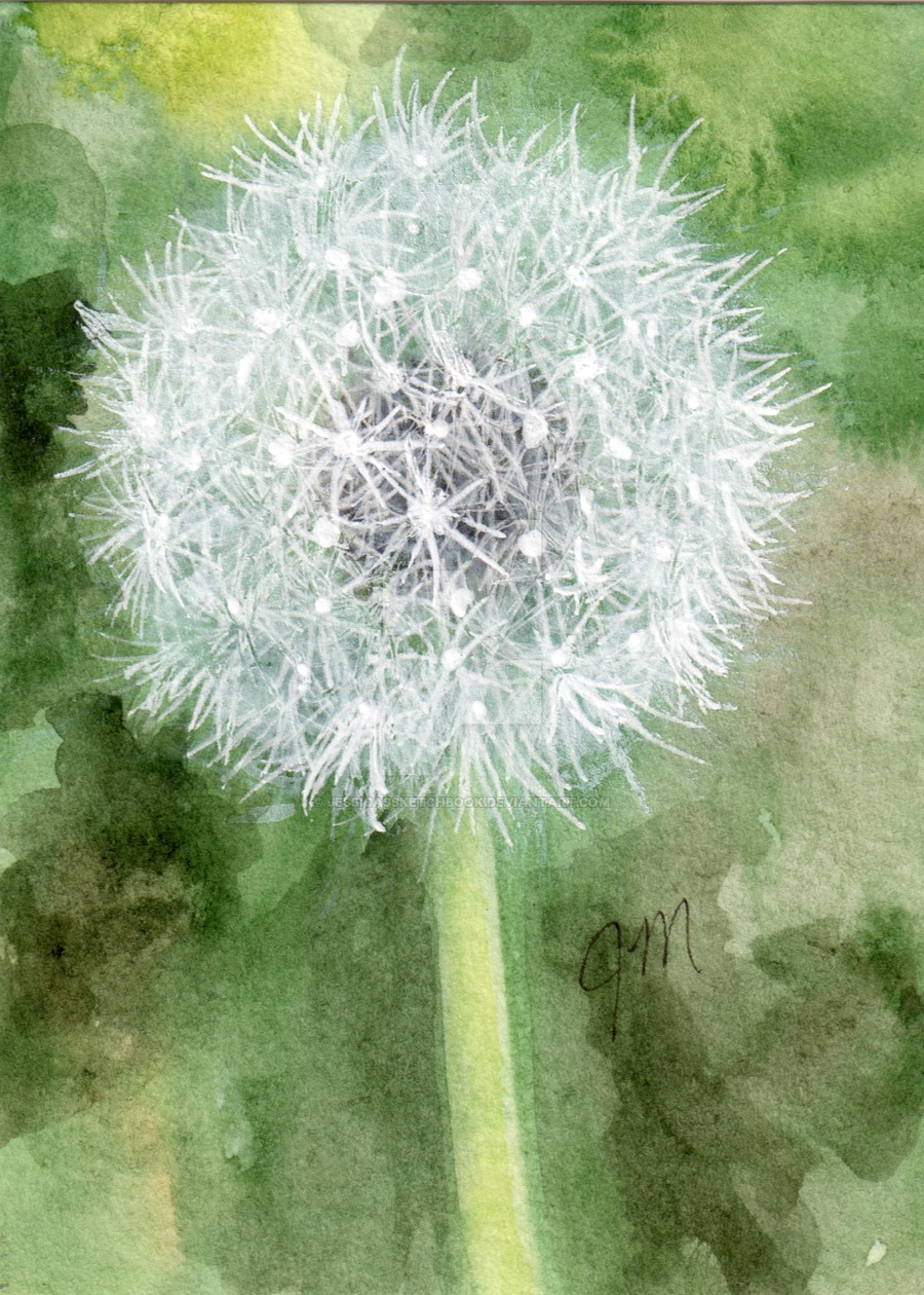 900x1260 Dandelion (Watercolor And White Gel Pen) Aceo By