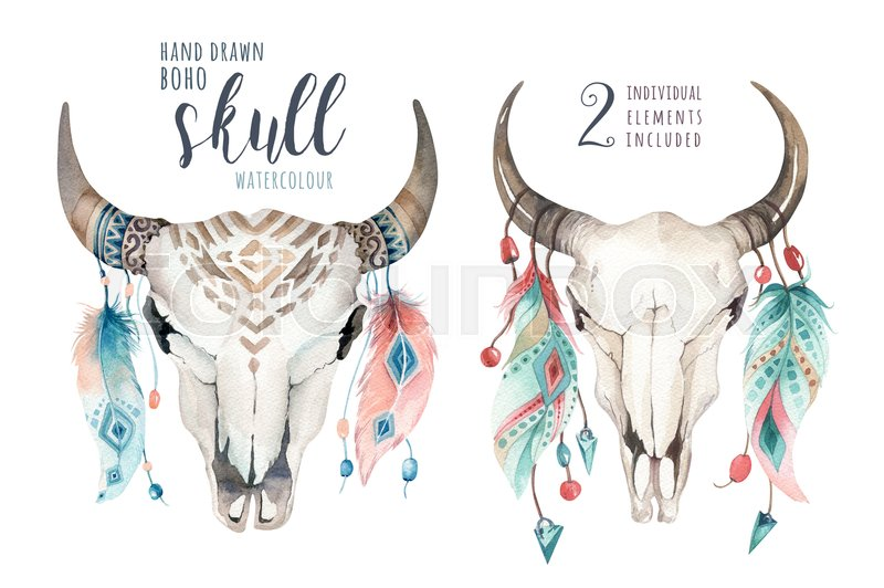 800x532 Watercolor Bohemian Cow Skull And Feather. Western Mammals. Boho