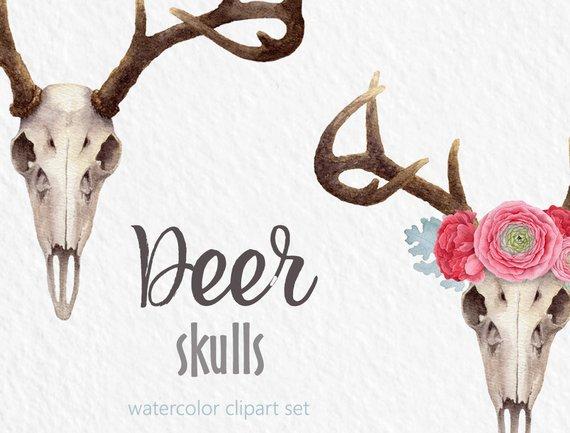 570x433 Watercolor Clipart Deer Clipart Skull Flower Crown Digital Etsy