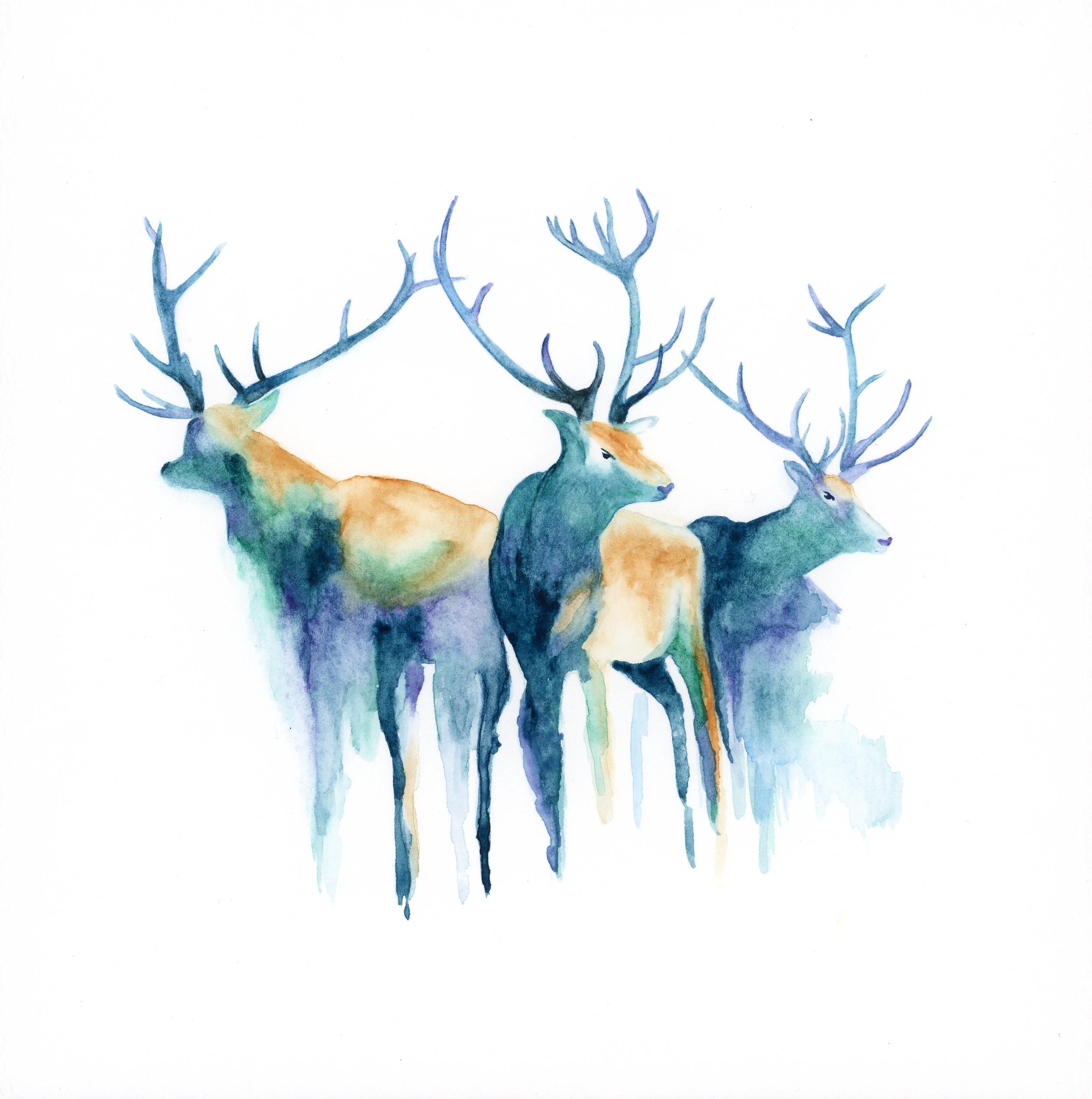 2519x2535 Watercolor Deer By My Wife Katlyn Watercolor