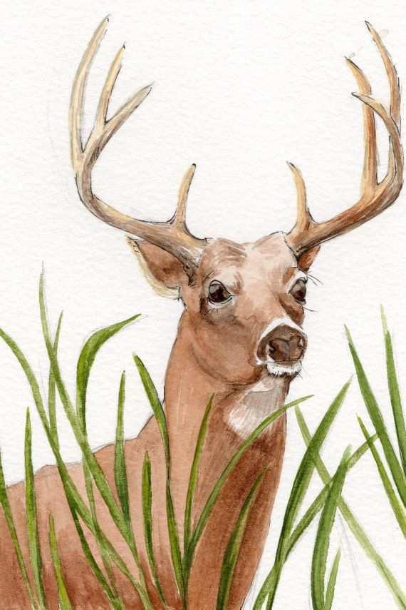 570x855 Deer Painting Best Of White Tail Deer Watercolor Painting Wildlife