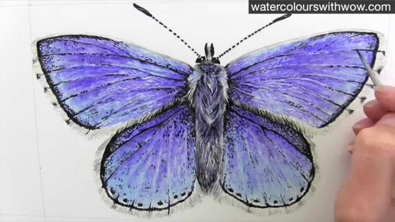 1280x720 How To Paint A Realistic And Detailed Blue Butterfly In Watercolor