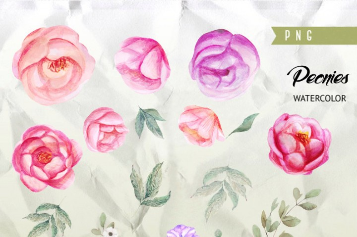 720x479 Peonies Watercolor Flowers Clipart. Boho, Hand Painted Watercolour
