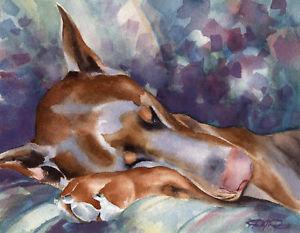 300x233 Red Doberman Pinscher Art Print Watercolor 11 X 14 Signed By