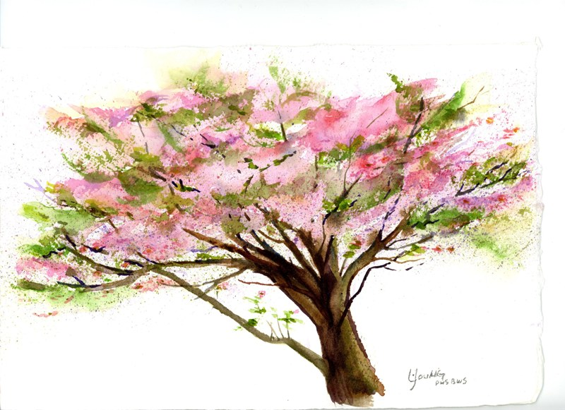 800x581 Dogwood Tree En Plein Air Linda Young Watercolors And Fine Art Blog