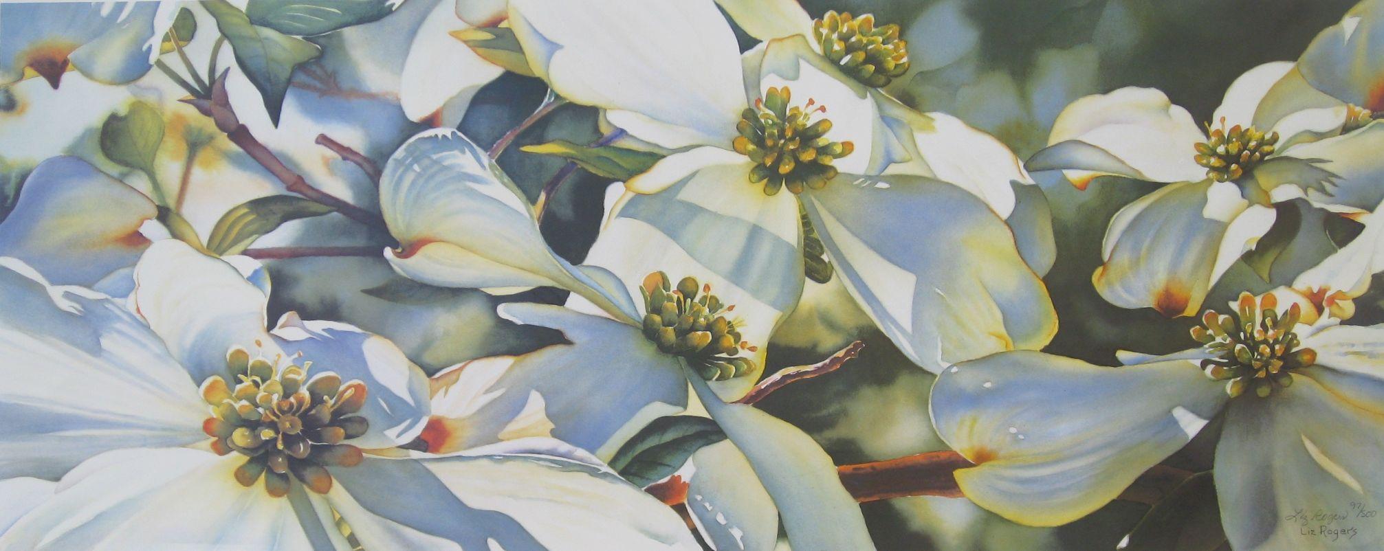 2013x802 Dogwood Watercolor, Watercolor Flowers, Flower Watercolor Art Prints