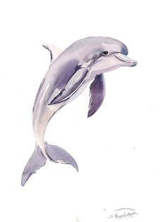 236x315 97 Best Dolphin Images In 2018 Dolphins Tattoo