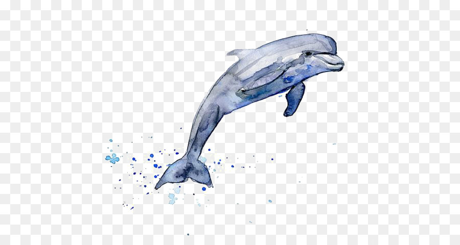 900x480 Drawing Dolphin Watercolor Painting Clip Art